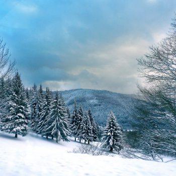 les Vosges sous la neige, sapins à l'horizon